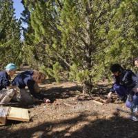 Spagna, svelato il mistero dei cipressi che hanno resistito al fuoco