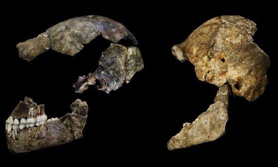 """Homo naledi, scoperta in Sudafrica una nuova specie di ominide: un nostro cugino più """"vecchio"""""""