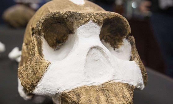 Homo naledi, scoperta in Sudafrica una nuova specie di ominide
