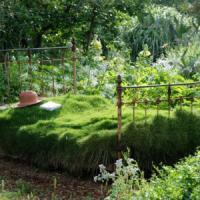 Crescere senza giardino? Bimbi più a rischio di obesità