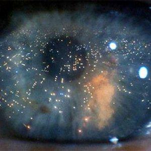 Identificati i segnali molecolari per ricostruire la retina