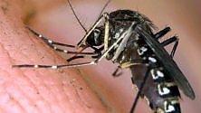 Le zanzare d'autunno   sono assopite ma attive