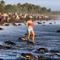 Costa Rica, tartarughe in pericolo: i turisti scattano troppi selfie
