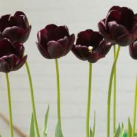 """I fiori indossano """"armature"""" di colore per sentirsi più belli"""