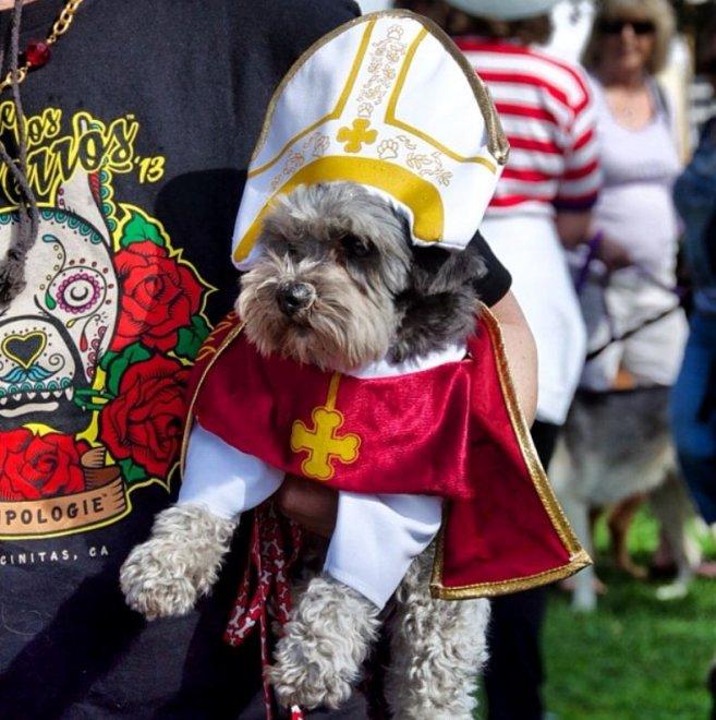 Usa, #PopeDogs e #PopeCats per Francesco: cani e gatti con abiti papali in omaggio a Bergoglio