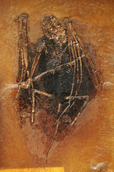 Germania, trovato fossile di 49 milioni di anni fa