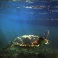 A nord della Nuova Zelanda l'ultimo santuario oceanico