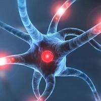 Il cervello come un computer: elettrodi e un algoritmo possono salvare i ricordi