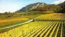 Tra natura e cultura    foto    lungo la Strada del vino