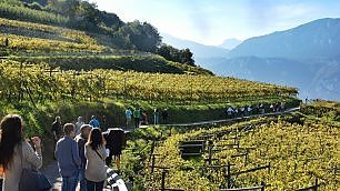 Il Trentino di mele e vini.   ft