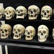 """Torino, guerra di petizioni  contro il museo Lombroso """"E' omaggio a un razzista"""""""
