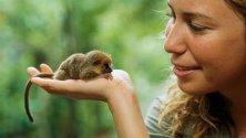 Piccole meraviglie animali creature di taglia  extra small