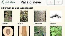 Con l'app riconosci foglie di alberi e piante /   Foto