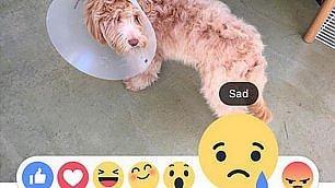 """Facebook Reactions   Foto    il """"mi piace"""" si è evoluto   Video   Come funziona"""