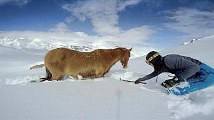 Cavallo imprigionato nella neve   due   snowboarder lo liberano