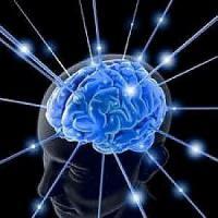 Ricostruito al computer frammento di corteccia cerebrale