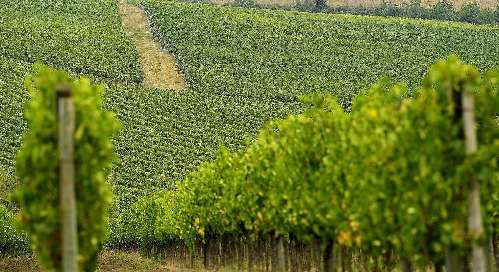 Colori, odori sapori e maratone: ottobre nel Chianti.  ft