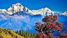 Libri e racconti di viaggio dagli USA al Nepal