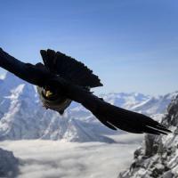 Cambiamenti climatici, a rischio gli uccelli delle Alpi