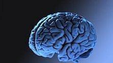 Ricostruito al computer un frammento di corteccia cerebrale