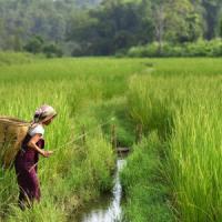 """Punjab, protesta degli agricoltori nel """"granaio dell'India"""": bloccati 880 treni"""