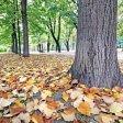 Il parco cambia look lo spettacolo del foliage