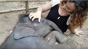 Buonanotte, elefantino: il cucciolo si addormenta con la ninna nanna