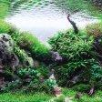 Piccoli mondi sommersi ecco gli acquari più belli