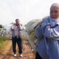 Uzbekistan, passa il ministro: il cotone viene riattaccato con la colla