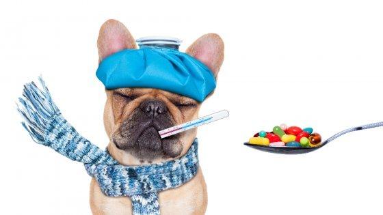 """Com'è difficile curare cani e gatti: """"Costi alle stelle per le medicine"""""""