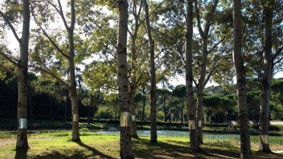 Il cimitero del terzo Millennio sarà un parco. Dove gli alberi prenderanno il posto delle tombe