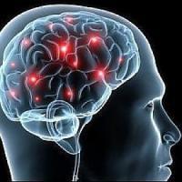 È racchiuso nel cervello il segreto del multitasking