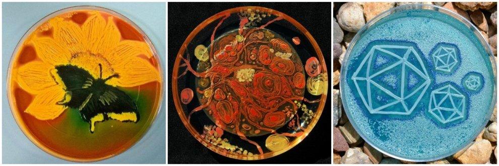 """La """"Notte stellata"""" di van Gogh con i batteri: microbiologi come pittori"""