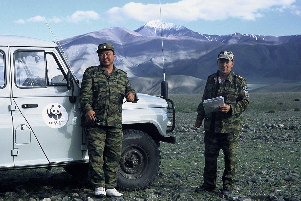 """Fa troppo caldo per il leopardo delle nevi. Il WWF: """"Rischia di sparire"""""""