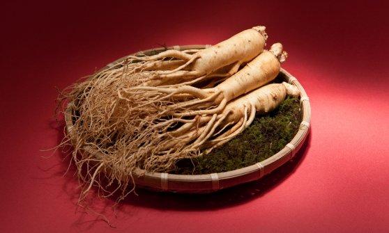 """Expo, Petrini: """"Il cibo prima di tutto, ma nutrire il pianeta non resti solo uno slogan"""""""