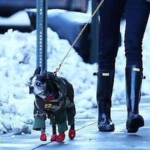 """Come """"invernalizzare"""" il vostro cane. I consigli per prepararsi al grande freddo"""