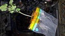 """La """"Magic plant"""" sarà il nuovo modello dell'agronomia spaziale"""