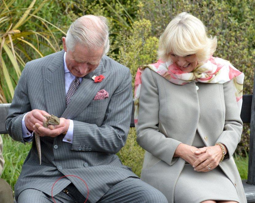 Nuova Zelanda, attacco alla monarchia: il calabrone spaventa Carlo e Camilla
