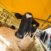 La guerra del latte continua: sit-in degli allevatori Coldiretti davanti ai supermercati