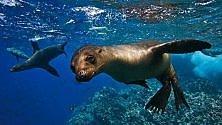 Dortmund, leone marino picchiato a morte allo zoo