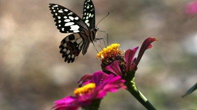 """Farfalle, mosche e zanzare in città A novembre è """"primavera d'autunno"""""""
