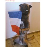 #JeSuisChien: sul social il ricordo del cane-eroe Diesel. Ma c'è anche chi critica