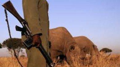 """Wwf lancia #diamovoce:  """"Fermare il massacro di elefanti, tigri, oranghi & c."""""""