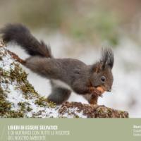 Calendario Lav 2016, l'arte dei fotografi per gli animali minacciati