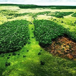 """Sostenibilità e difesa del patrimonio arboreo: torna la """"Giornata nazionale degli alberi"""""""