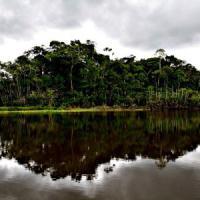 Amazzonia, a rischio più della metà delle specie di alberi
