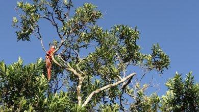 Deforestazione, a rischio in Amazzonia più della metà delle specie arboree -   Foto