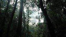Foresta fossile di 400 mln di anni fa influenzò cambiamento climatico