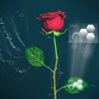 Elettronica organica e biologia vegetale: sbocciata la prima rosa bionica