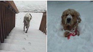 Tra ghiaccio e ruzzoloni i cani si divertono sulla neve